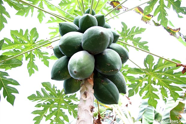Vietnam - Papaya