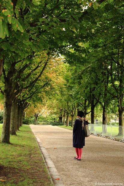 Baumallee im Kurpark von Baden Baden