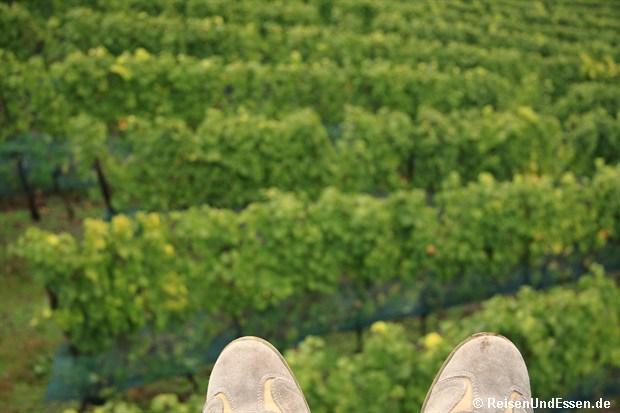 In der Sesselbahn über die Weinreben