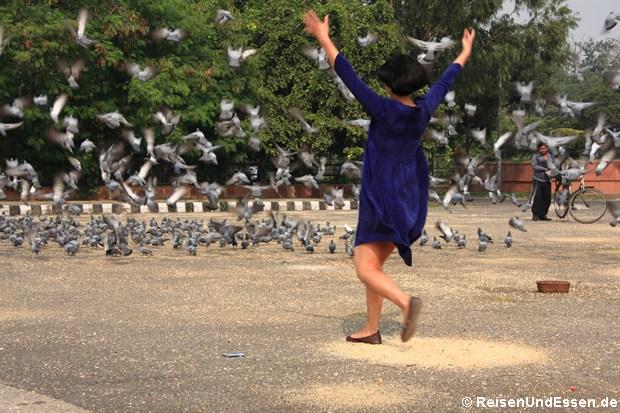 Lasst die Tauben fliegen