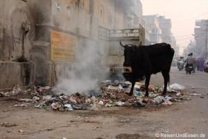 Unterwegs in den Straßen Jaipurs oder das Kontrastprogramm schlechthin