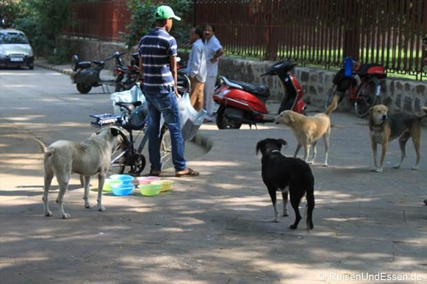 Hunde-Fütterung in der Nähe vom Humayun Mausoleum