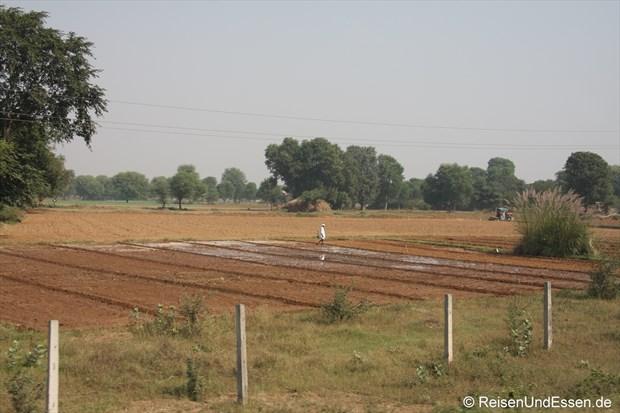 Ackerland zwischen Jaipur und Agra