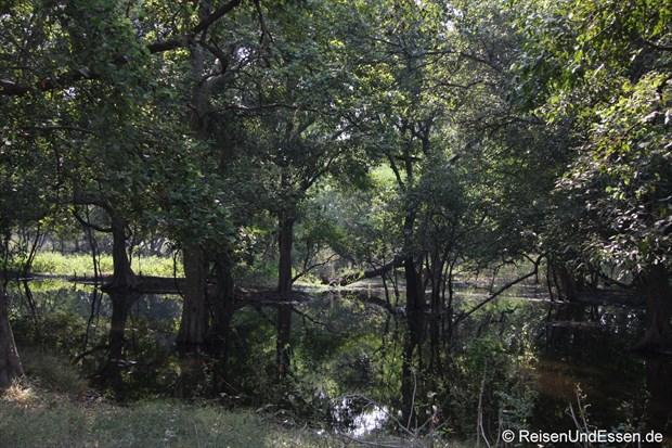 Gewässer im Vogelschutzgebiet in Bharatpur