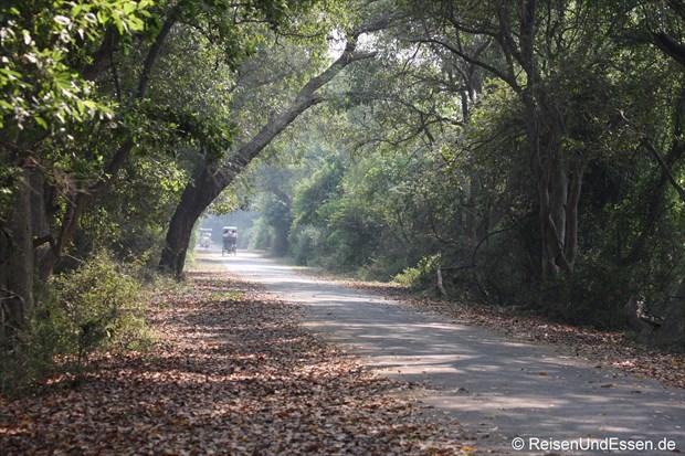 Weg im Vogelschutzgebiet in Bharatpur