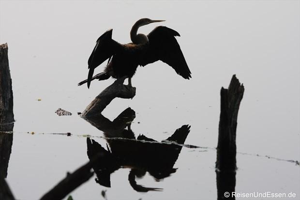 Spiegelung im Vogelschutzgebiet in Bharatpur