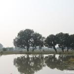 Landschaft zwischen Orchha und Khajuharo