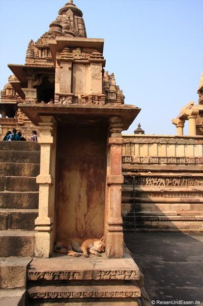 Ruhepause für einen Hund am Lakshmana Tempel von Khajuraho