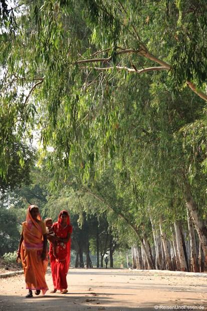 Zwei Inderinnen unterwegs in einer Allee