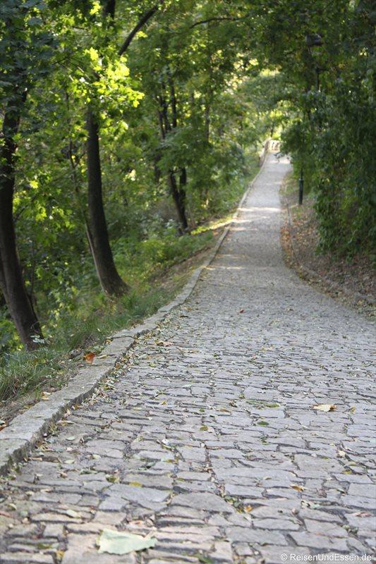 Spazierweg im Grünen in Prag
