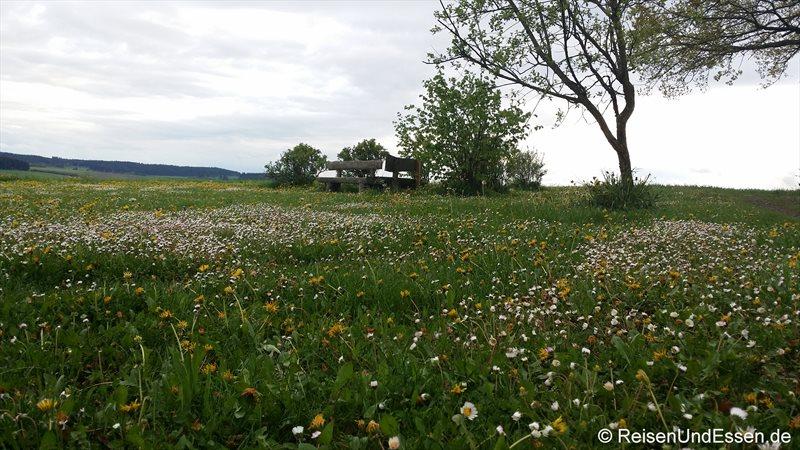 Frühlingswiese mit Holzbank im Schwarzwald