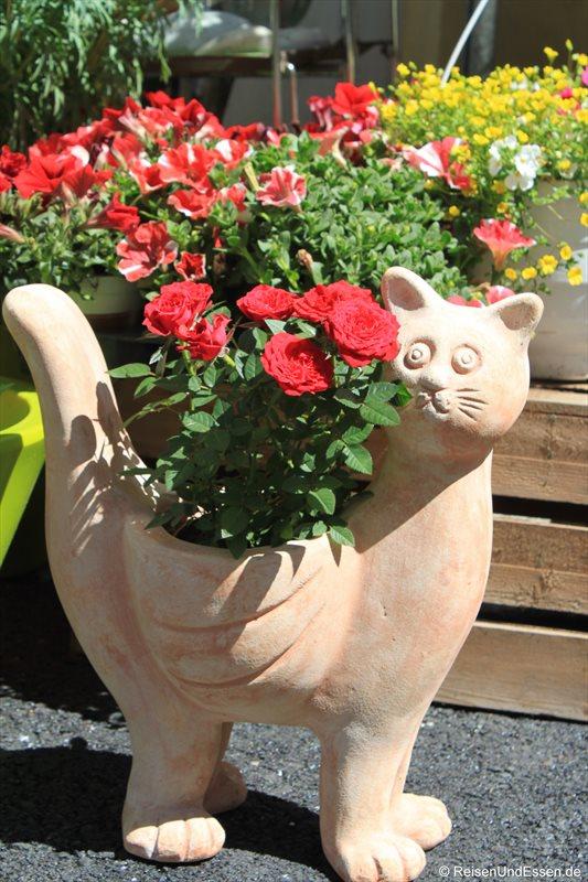 Katze mit Rosen in Hall