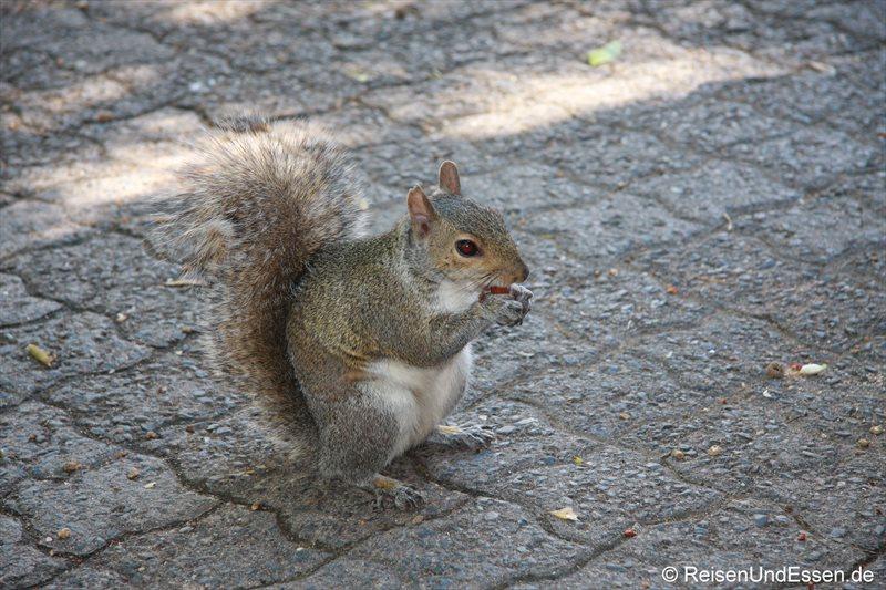 Hörnchen im Company Park