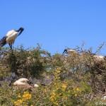 Auf der Route 62 von Kapstadt nach Oudtshoorn