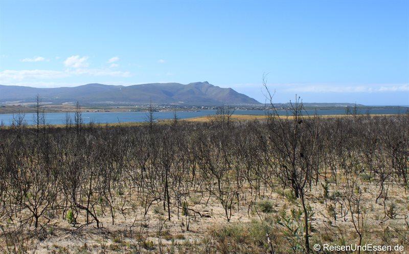 Landschaft kurz vor Kleinmond (im Hintergrund Fisherhaven)