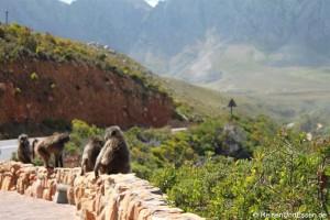 Read more about the article Von Hermanus über den Clarence Drive nach Kapstadt