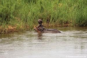 Ankunft im Skukuza Camp im Krüger Nationalpark