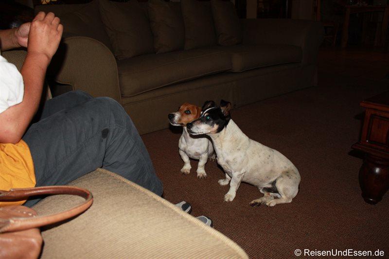 Hunde in der Outlook-Lodge in Johannesburg