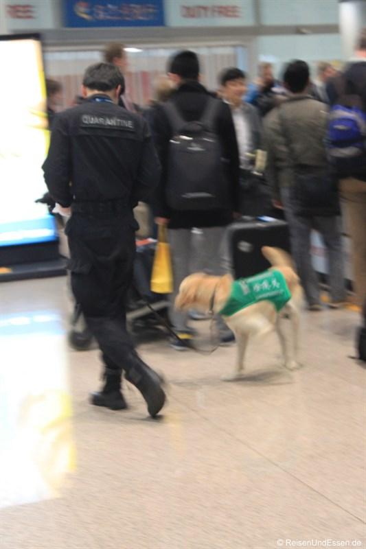 Schnüffelhund am Flughafen Beijing (leider unscharf)