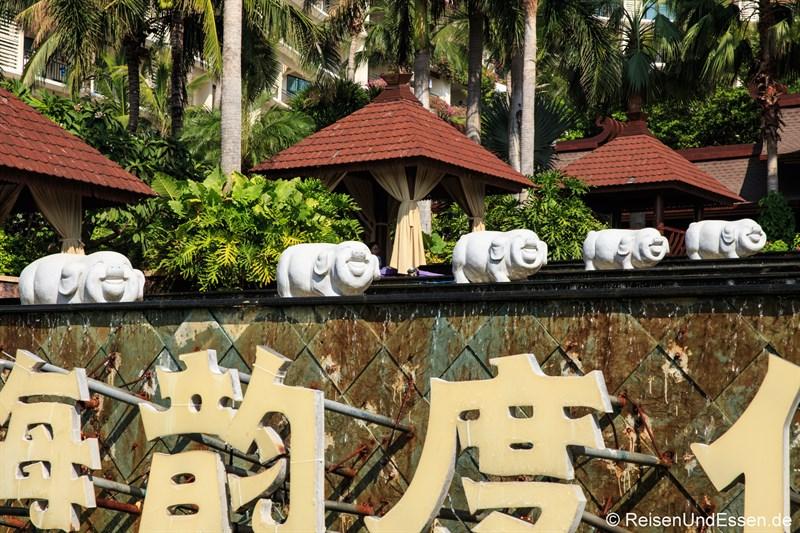 Glückliche Schweine im Ocean Coast Resort