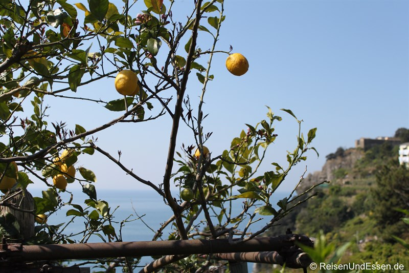 Zitronen in der Cinque Terre