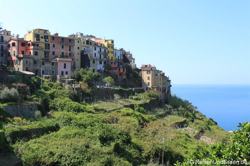 Blick auf Corniglia in den Cinque Terre