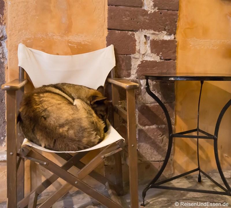 Hund schläft vor Taverne