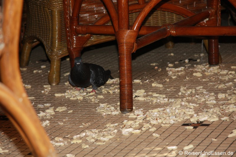 Erdnüsse und Taube in der Long Bar - oder wo man etwas auf den Boden fallen lassen darf