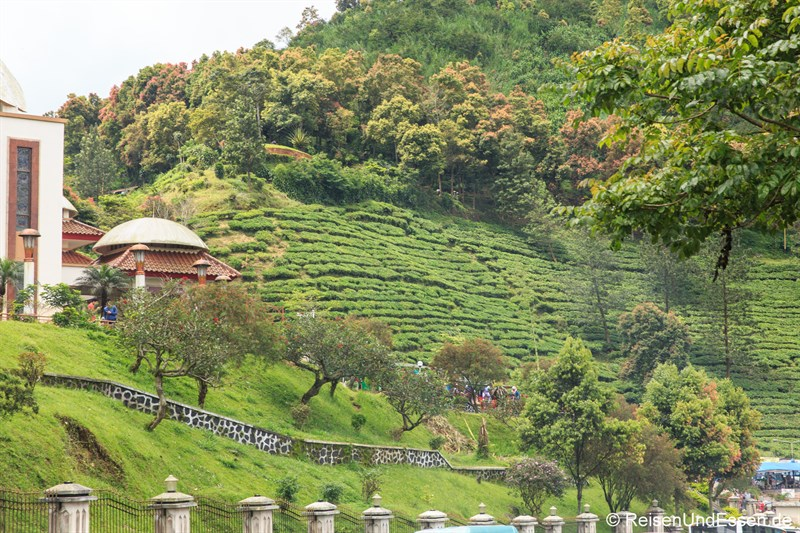 Teeplantagen am Puncak Pass