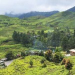Teeplantagen am Puncak Pass in Indonesien
