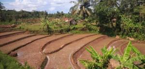 Mit dem Zug Argo Wilis von Bandung nach Yogyakarta