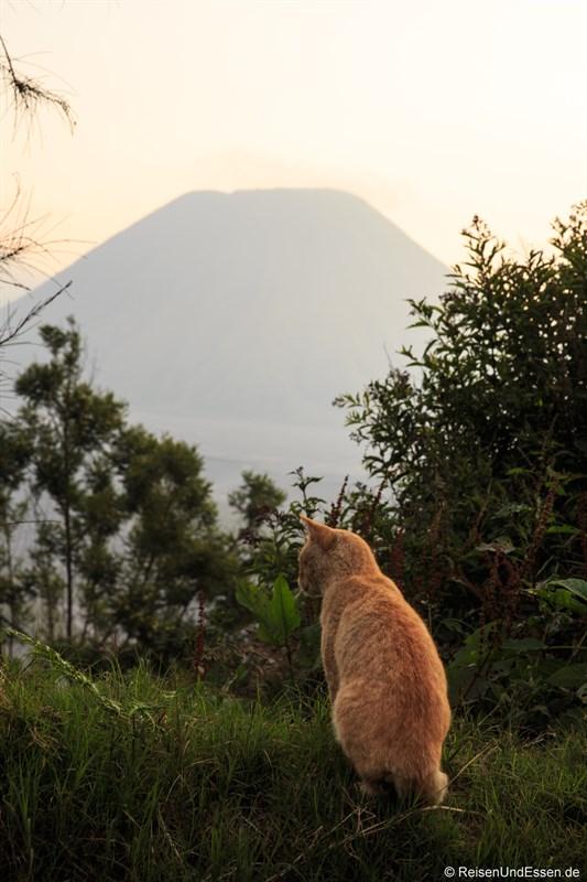 Katze in der Caldera am Vulkan Bromo