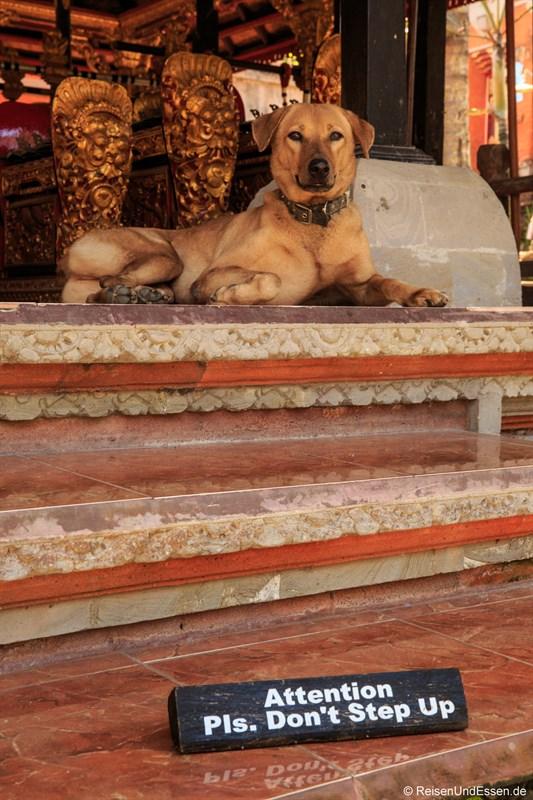 """Wachhund"" beim Stadtpalast Puri Saren Ubud"