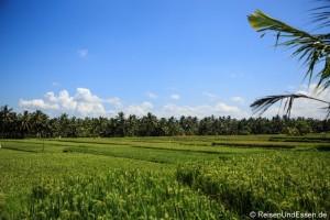 Rundgang durch Ubud mit Tempel, Reisfelder und mehr