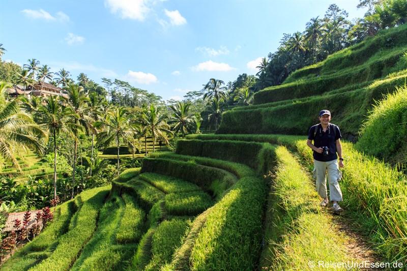 Unterwegs in den Reisterrassen von Tegalalang