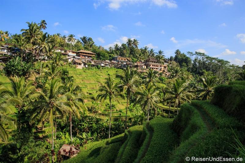 Häuser an der Straße bei den Reisterrassen von Tegalalang