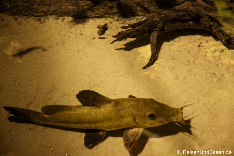 Fisch im Klimahaus Bremerhaven