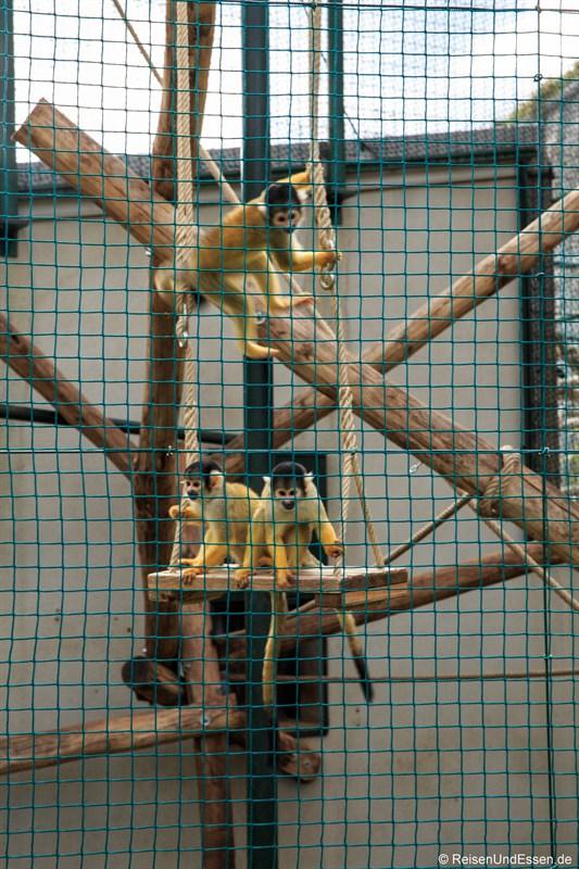 Affen im zoologischen Garten des Museums