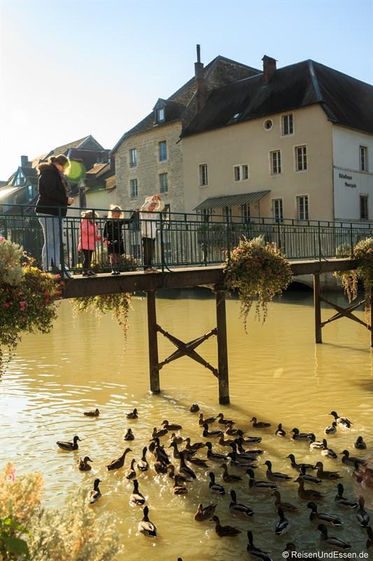 Enten in dem Fluss La Loue in Ornans