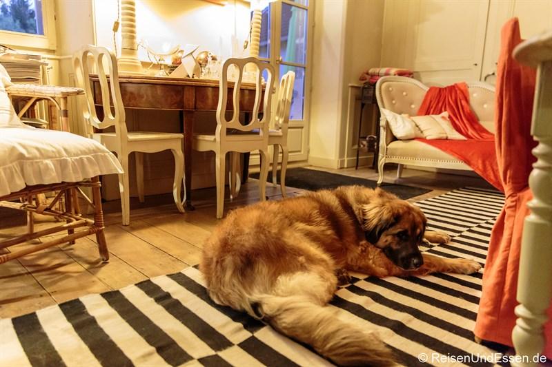 Wachhund im Le Jardin de Gustave in Ornans