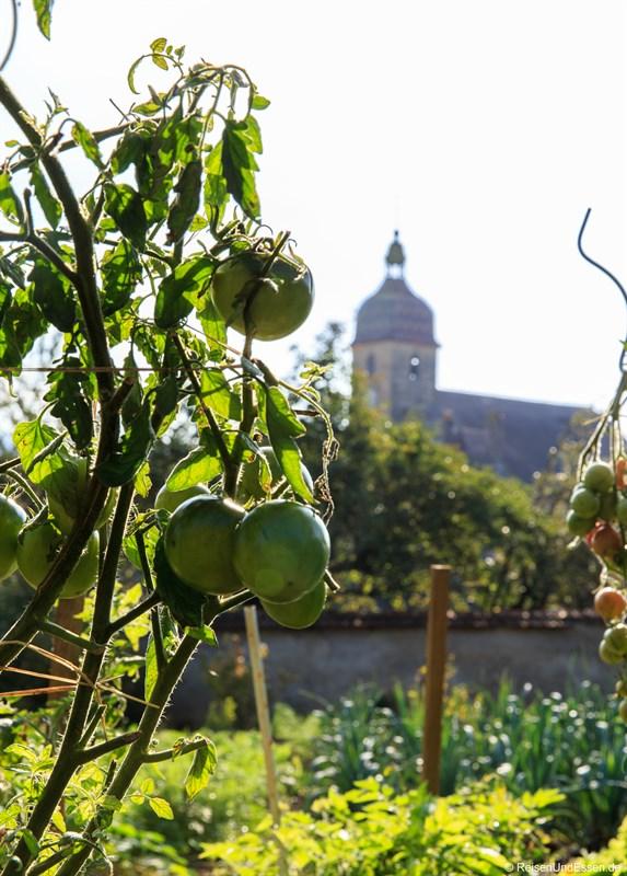 Tomaten im Biogarten