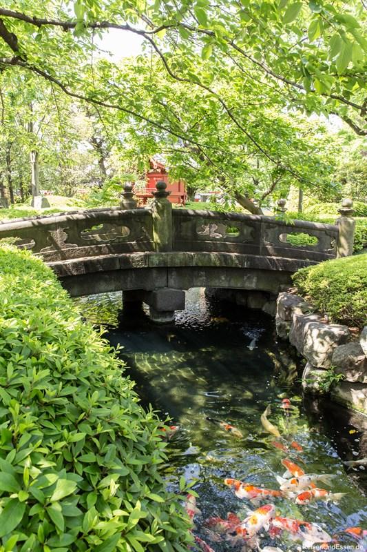 Kois im Japanischen Garten beim Senso-ji Tempel