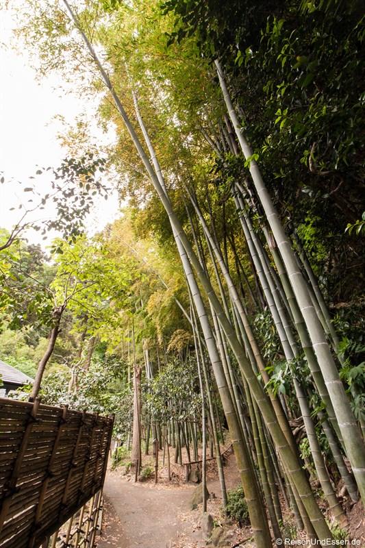 Bambuswald in der Tempelanlage Jochi-ji
