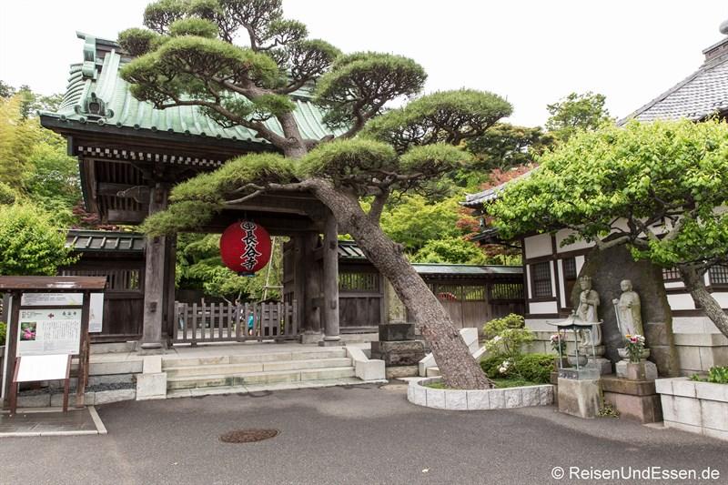Eingang zum buddhistischen Tempel Hase-dera