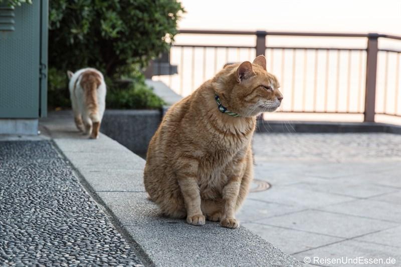 Katzen in Enoshima