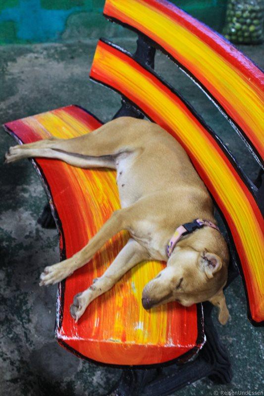 Schlafender Hund im Restaurant beim Nai Harn Beach