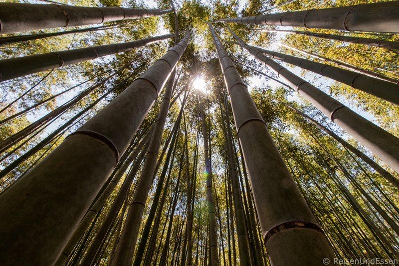 Bambuswald in Kyoto – Alternative zu Tempel und Gärten