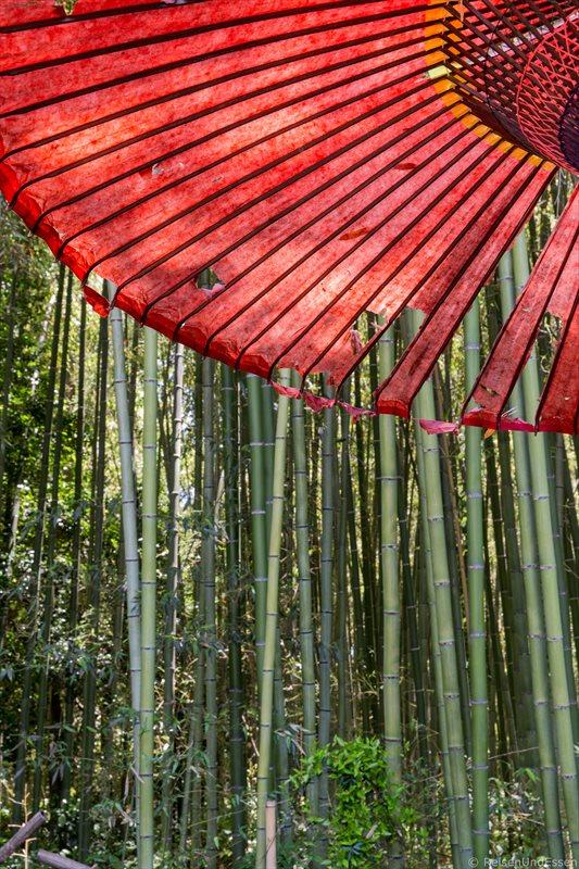 Schirm und Bambus im Sagatenruyi in Kyoto
