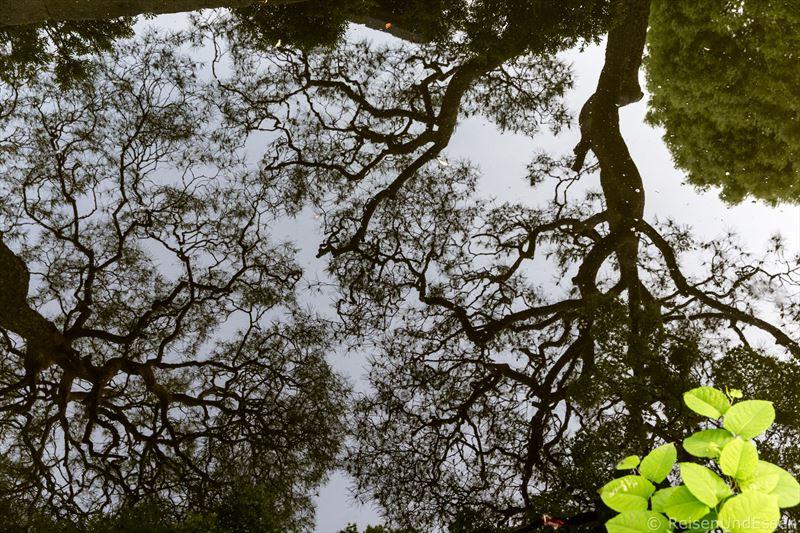 Teich mit Spiegelung von Japanischen Ahornbaum