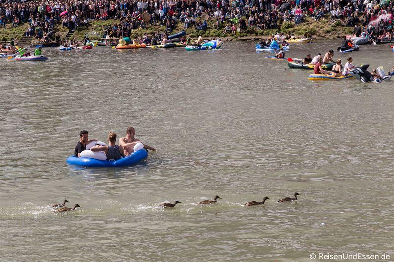 Enten auf der Flucht beim Nabada in Ulm